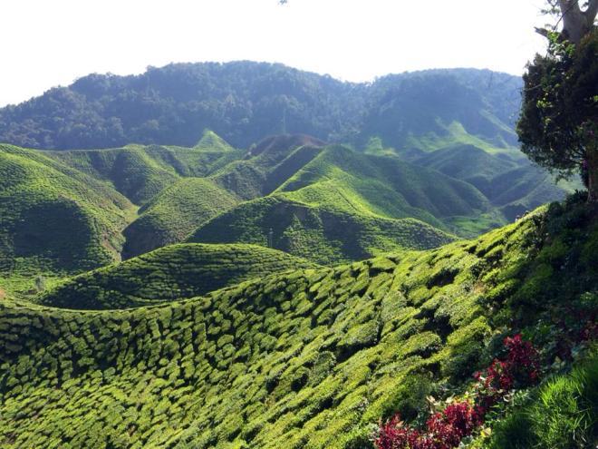 plantations de thé, Cameron Highlands, Malaisie | hintmytrip.com Blog tour du monde sac-a-dos